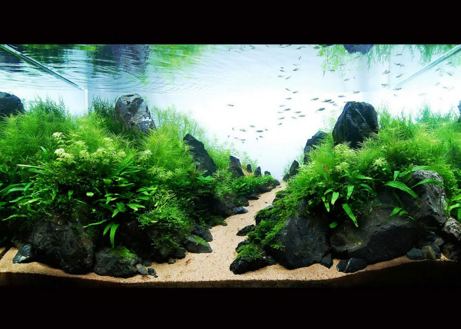 Furniture: Contemporary Aquascaping Designs Aquarium Decorating ...