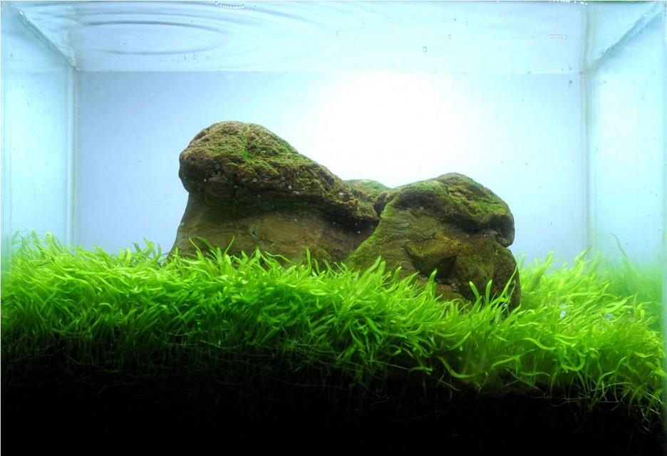 Great-Reef-Leafy-Green-Seaweed ...