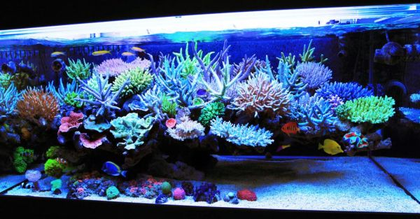 Unique Aquarium Decor Ideas | Modern Interior Design Ideas