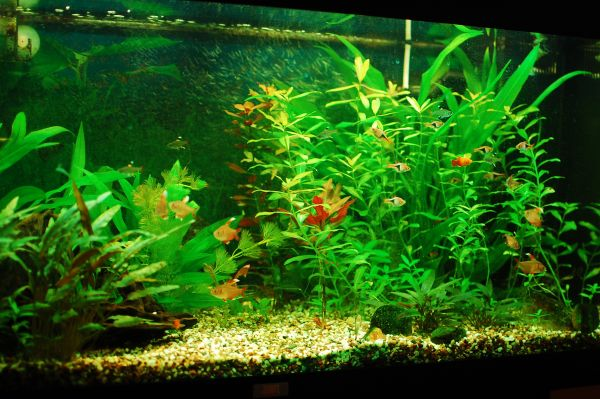 Beautiful-home-fish-tank-looks ...