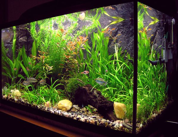 furniture cool freshwater fish tanks are far easier to maintain