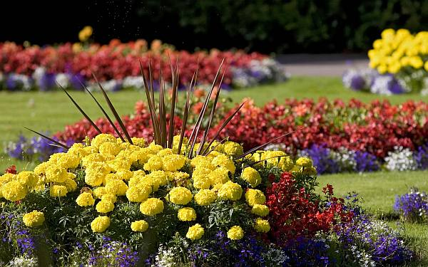 Gorgeous-flower-bed-in-the-