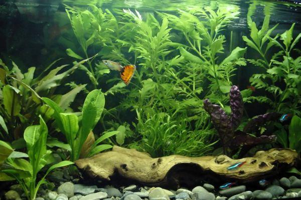 Interior design ideas architecture blog modern design for Used fish tank