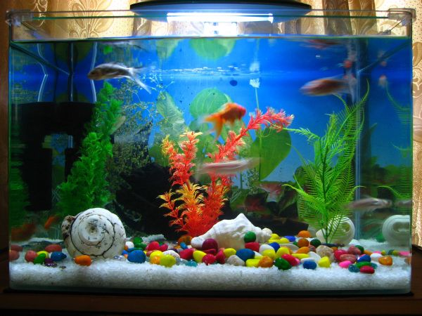 Furniture: Playful And Contemporary Fish Tank Design With Colorful ...