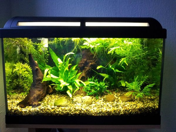 403 forbidden for Used fish tank