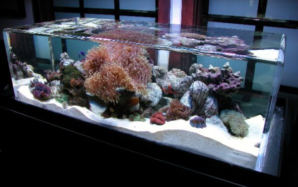 Furniture: Unique Salt Water Fish Tanks Can Mimic The Ocean Bed To ...